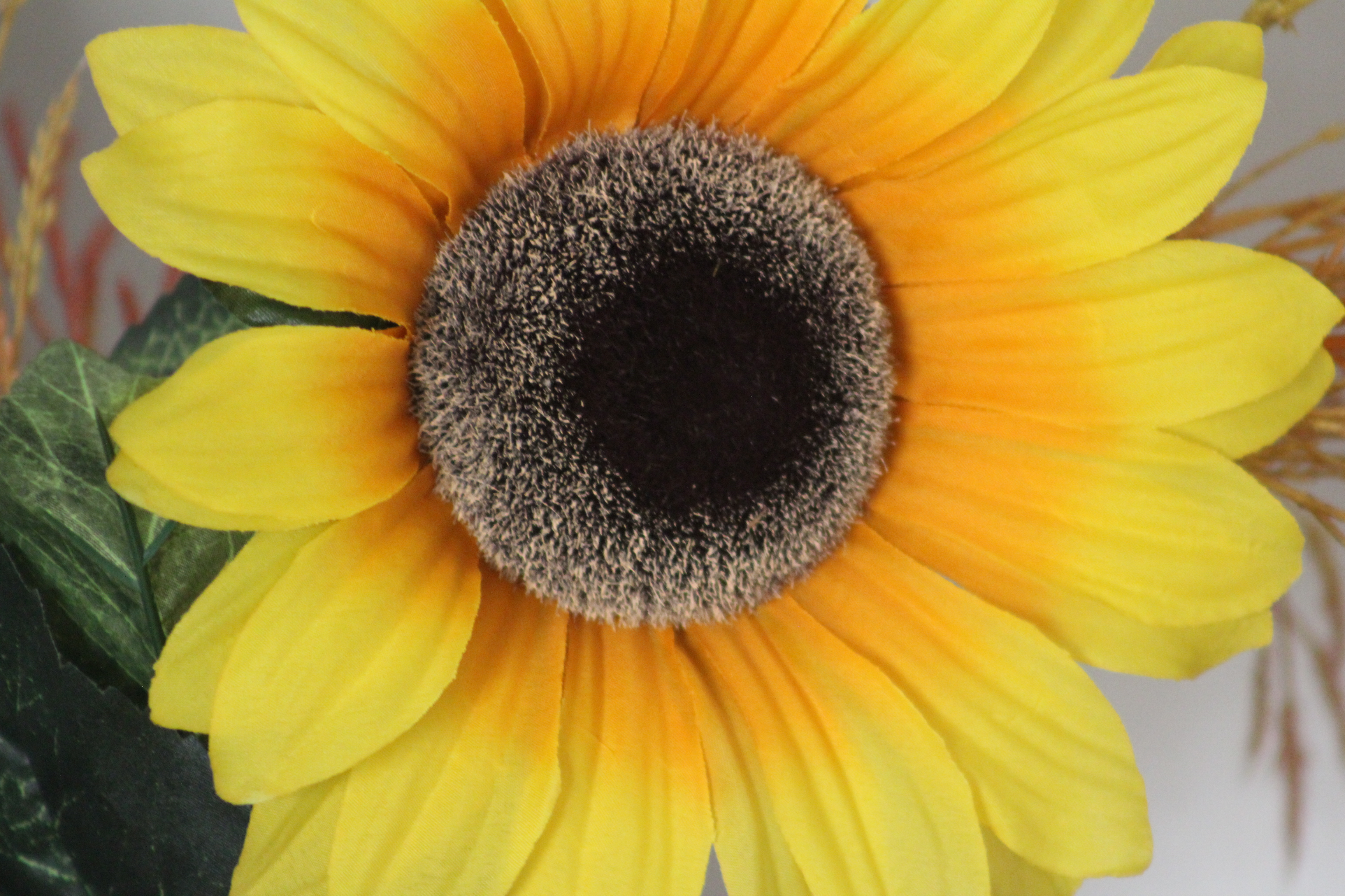 Sunflower Illegality and Other Things That Shouldn't Be Act I